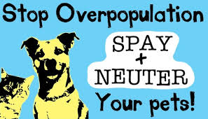 Stop Overpopulation Spay and Neuter Your Pets