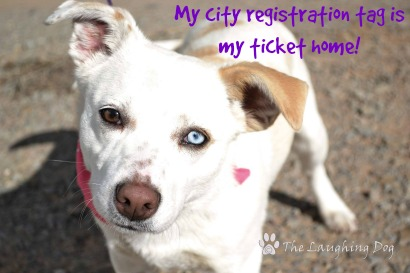 My City Registration Tag is My Ticket Home!